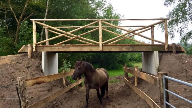 Streep door viaduct voor fietsers en wisenten op de Maashorst