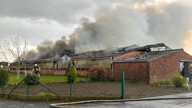 """Stal vol oldtimers in lichterlaaie na blikseminslag tijdens onweer in Lichtervelde: """"Onze auto's zien uitbranden... het doet pijn aan het hart"""""""