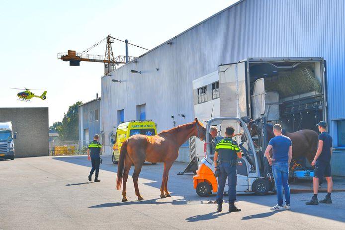 Een man in Bergeijk kreeg een trap van een paard.