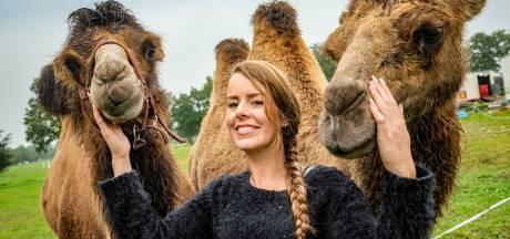 Kamelen verdwijnen langs N332 in Laren: gestrand circus kan na uniek jaar eindelijk weer reizen