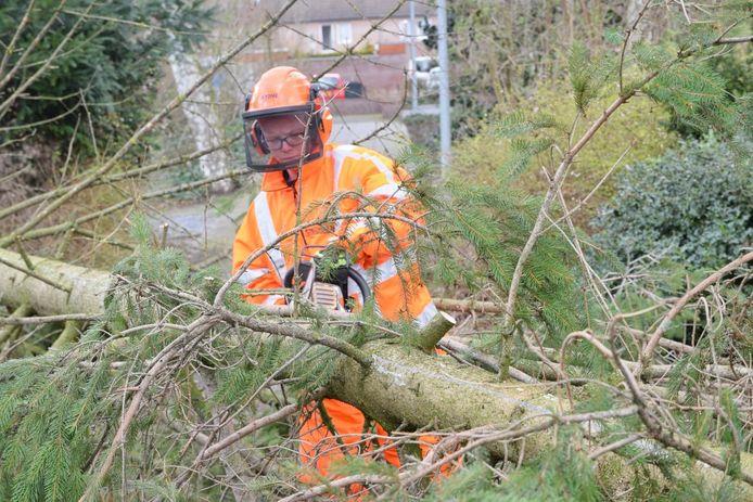 Een boom op de weg in Goirle wordt in stukken gezaagd.
