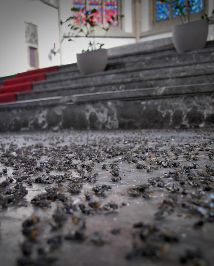De vloer in de kerk is een 'pikzwarte deken van dode vliegen'.