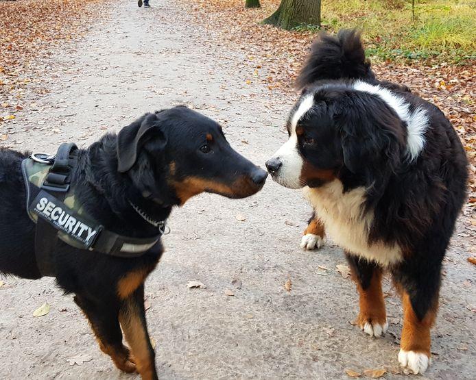 Het SVF pleit voor een hondenlosloopzone in minder 'waardevol' bosgebied in plaats van een boomkap