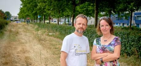 Ontsteltenis over bijenbaan Schiedam: 'Idioot heeft het platgemaaid'