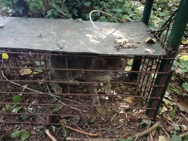 Zo vond Tine Goessens uit Zwalm haar kat terug.