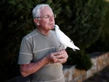 """L'amitié improbable entre un pigeon et un homme: """"On est ensemble parce qu'on se sent bien"""""""