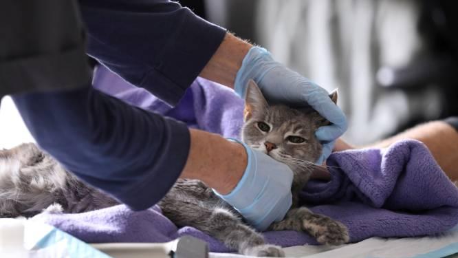 """Toegangsexamen voor opleiding dierenarts op komst: """"Kwantiteit beperken om kwaliteit te bewaren"""""""