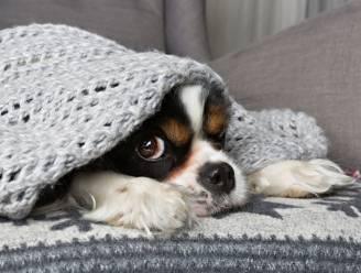 Man (41) die hond van vader ophing, staat terecht voor verkrachting van nichtje