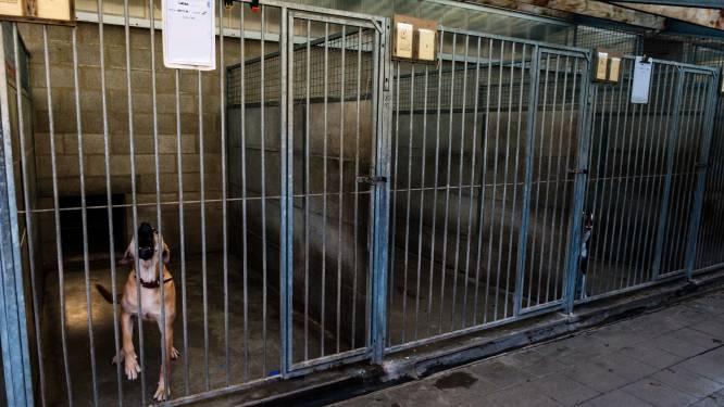 """Een dier adopteren uit asiel is bijzonder populair: """"Wel vijftig kandidaten voor één hond"""""""