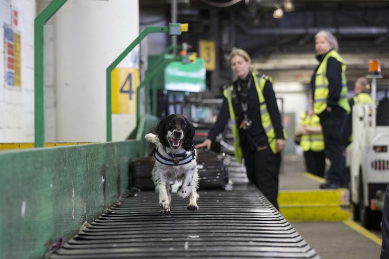 Border Force detector dogs Beeld Getty Images