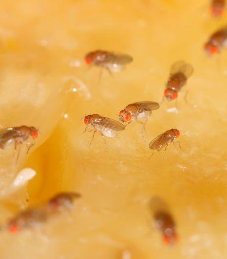 Fruitvliegjes en andere beestjes houd je met deze tips buiten de deur
