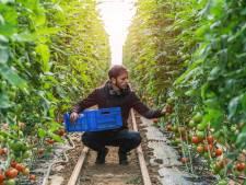 Fruittelers willen arbeidsmigranten huisvesten bij de boeren in Vijfheerenlanden