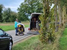 Gewond paard trapt vrouw tegen hoofd na val in trailer