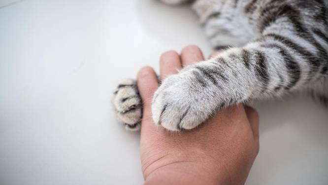 Child Focus zet katten in tegen seksueel kindermisbruik