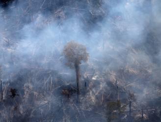 """NGO: """"Bosgebied groter dan Frankrijk verdwenen tussen 2002 en 2019"""""""