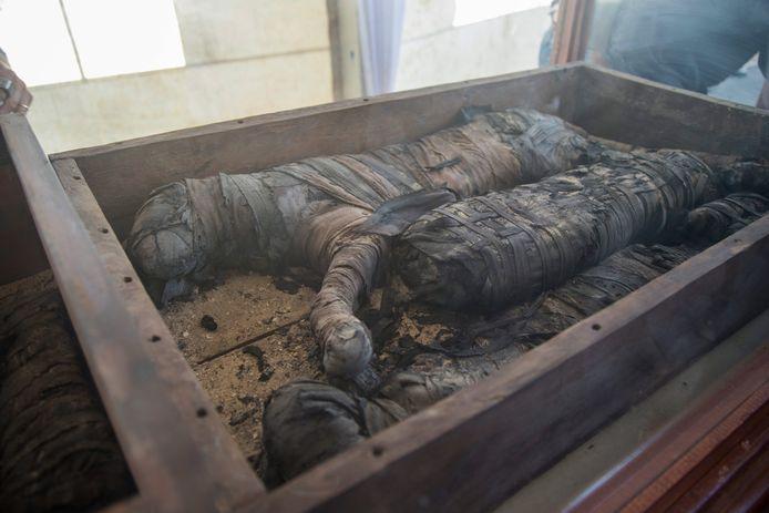 Gemummificeerde katachtigen worden tentoongesteld in Saqqara.