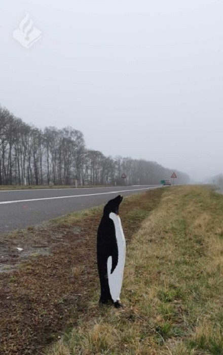 Een van de pinguïns langs de N34 tussen Eelde en Zuidlaren.