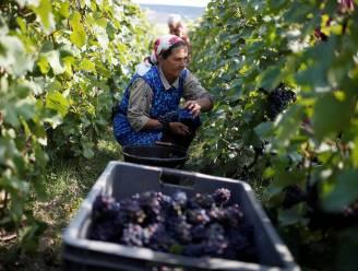 Champagneoorlog borrelt op in Frankrijk