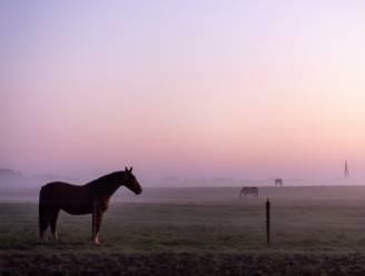 Paarden in de ochtend, een Twents landschapstafereel in oktober