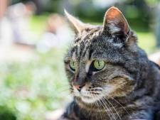 Kattenhater actief in De Bilt? Meerdere katten ziek, mogelijk door vergiftiging