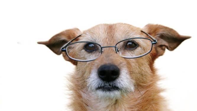 Nieuwe trend? Een hond als psychiater
