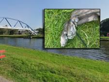 Politie doet gruwelijke vondst in Zwolle: 'Vermoeden dat hond levend in water is gegooid'