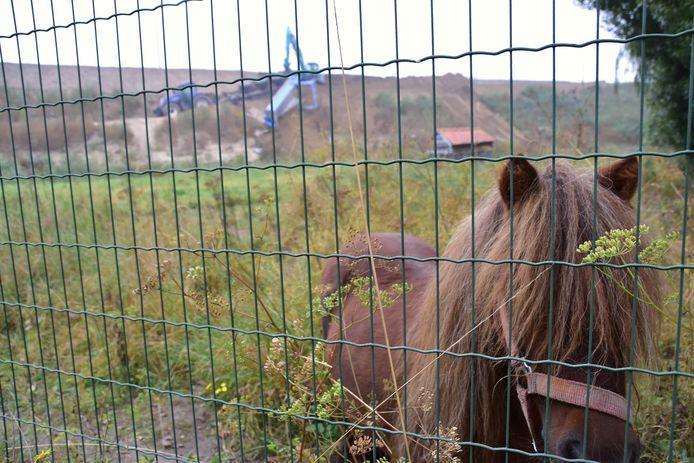 Een pony in de weide vlakbij was eenzame getuige van het ongeval met de aanhangwagen langs de Keizersstraat in Stasegem.