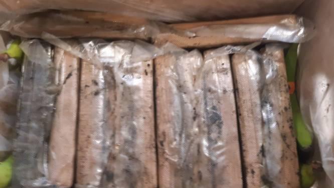 Douane neemt 2,5 ton cocaïne in beslag