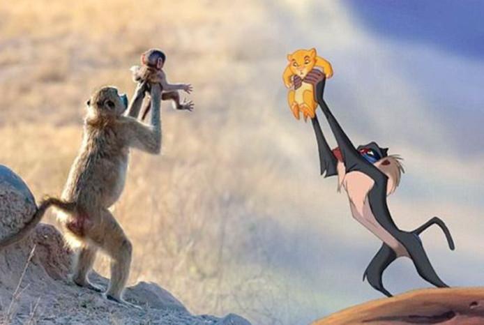 De baviaan houdt haar jong in de lucht alsof ze de scène uit De Leeuwenkoning imiteert