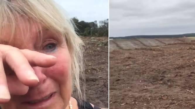 """Vrouw schreeuwt het uit na brutale houtkap: """"Ze hebben al onze koala's gedood"""""""