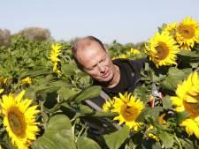 Gele pracht in zomers oktober in Slijk-Ewijk