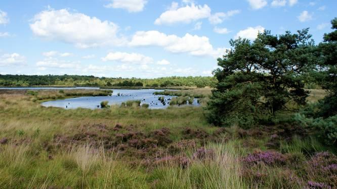 """Grenspark Kalmthoutse Heide dan toch kandidaat om Nationaal Park te worden: """"Plannen aangepast na ongerustheid bij gemeenten"""""""