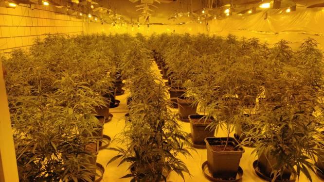 Cannabisboeren staan twee maanden na ontdekking van plantage al voor de rechter