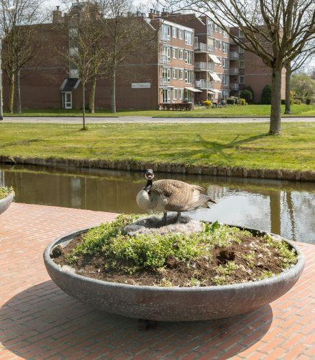 'Waggel de huisgans' terug op het Kamper nest: een bloembak voor het stadhuis