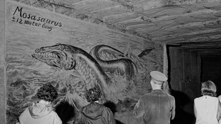 Tekening van Mosasaurus in de Gemeentegrot in Valkenburg, in 1966 Beeld ANP