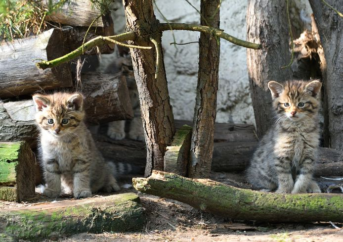 De twee pasgeborenen kijken in hun nieuwe thuis eerst nog even de kat uit de boom.