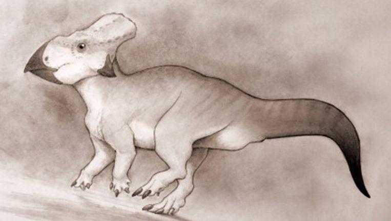 Een impressie van hoe de dinosaurus er zou kunnen uitgezien hebben. Beeld Nick Longrich/University of Bath