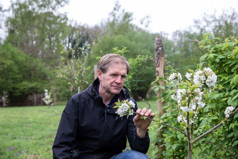 Frans Beckers, de milieuambtenaar voor de gemeente Zutendaal, bij de bloesems in het voedselbos.