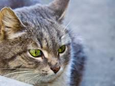 Dierenbescherming redt 14 katten uit ernstig vervuilde woning in Hengelo