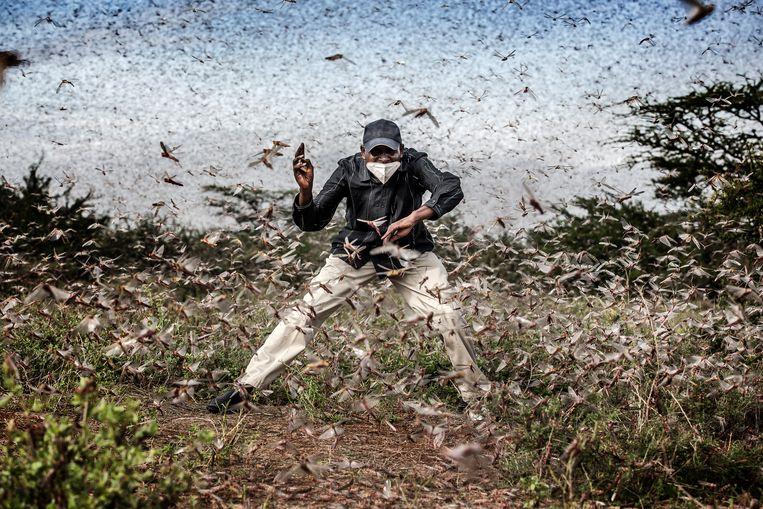 Vechten tegen de sprinkhanenplaag die oogsten verwoest in Oost-Afrika.    Beeld Luis Tato for The Washington Post