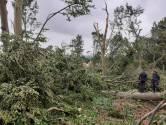 Toekomst weggevaagd Lombokbos Leersum onzeker: 'Alle bomen zijn omgewaaid'