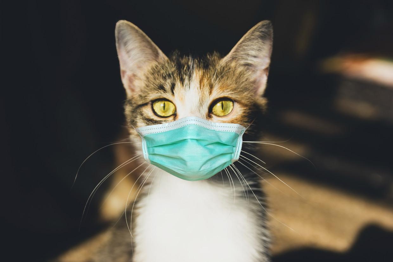 Kat met mondmasker Beeld Shutterstock