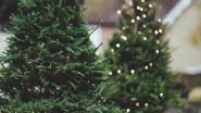 Kerstboominzameling aan Oase