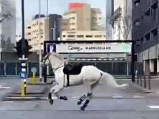 Hoe gaat het nu met die schimmel die tijdens de rellen in Eindhoven op hol sloeg?