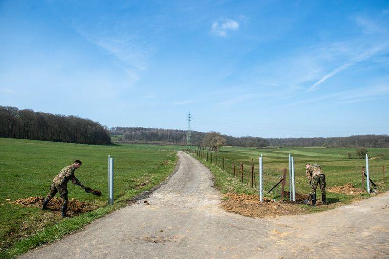Het Luxemburgse leger bouwt een hek op de grens tussen België en Luxemburg om de met varkenspest besmette everzwijnen buiten te houden.