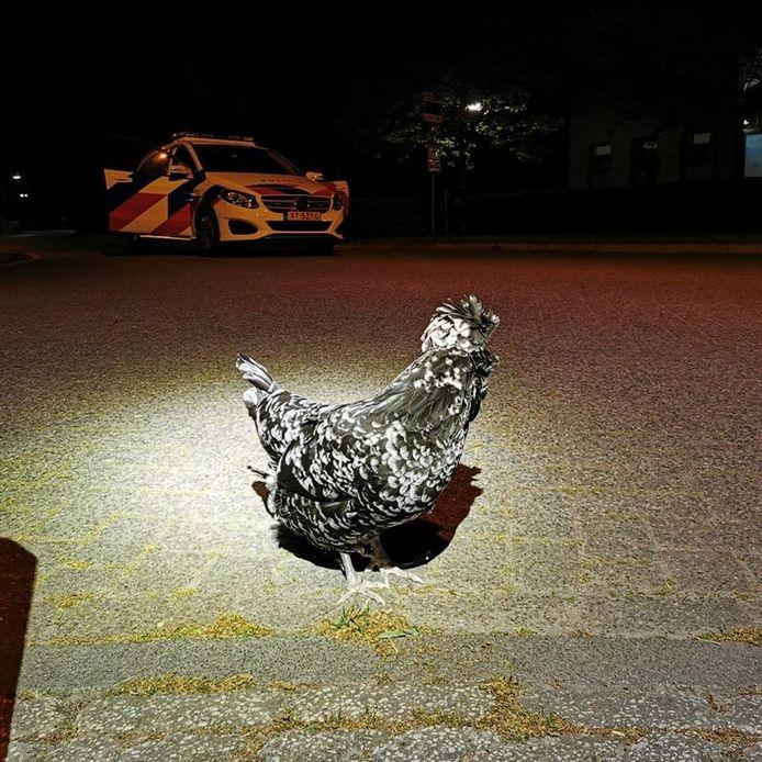 Van wie is deze kip in Moergestel?