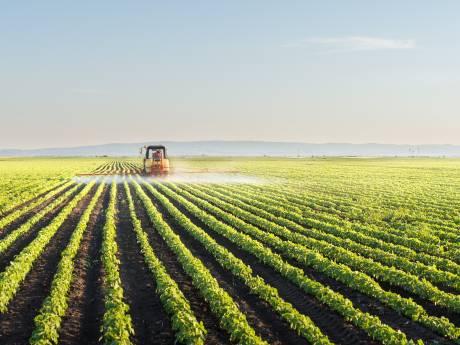 Nederland exporteert massaal verboden pesticiden:  in thee en tomaten komen ze weer terug
