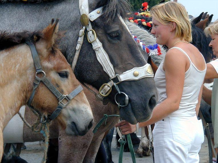 Op Feeste 't Ename kunnen ook paardenliefhebbers terecht.