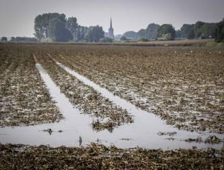 """Aardappelen en frieten worden wellicht duurder na overstromingen: """"Mijn oogst is voor 99 procent naar de vaantjes"""""""