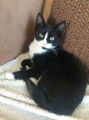 Marie-Claire Degen (Den Bosch): ,,Mijn kat heet Beestje Karma Bitchy Degen. Ik noem haar:  Truttebol, Kleine Rotterdammer, Frutsel, Frutsel Stinkertje, In de weg-diertje.''